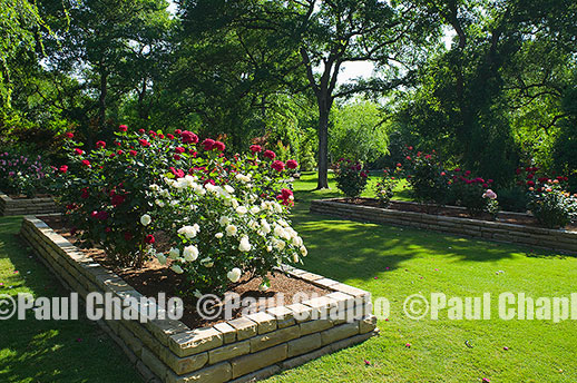 Rose Garden LAWN garden landscape architecture digital photographers Dallas, TX Texas Architectural Photography garden design
