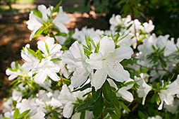 Flowers Dallas Photographer garden landscape architecture digital photographers Dallas, TX Texas Architectural Photography garden design